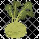 Kohlrabi Green Vegetable Icon