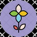 Kousa Icon
