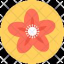 Kousa Dogwood Flower Icon