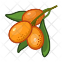 Kumquad Fruit Healthy Icon