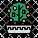 Kumquattree Kumquat Tree Icon