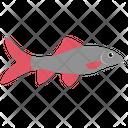 Labeo Bicolor Fish Icon