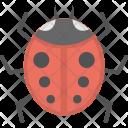 Ladybird Insect Ladybug Icon