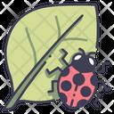 Leaf Ladybug Nature Icon