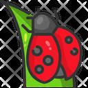 Ladybug Insect Garden Icon