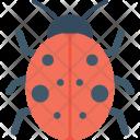 Ladybird Ladybug Insect Icon