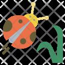 Ladybug Insect Spring Icon