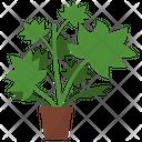 Lady's Mantle Plant Icon