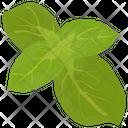 Lettuce Romaine Leaf Icon