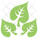 Large-Leaved Lime Icon