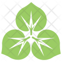 Flower Large Leaved Lime Icon