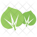 Shape Large Leaved Lime Icon