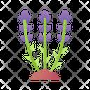 Lavender Plant Flower Icon