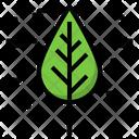 Leaf Nature Ecology Icon