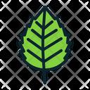 Nature Leaf Fall Icon