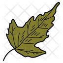 Leaf Botanical Foliage Icon