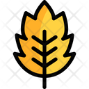 Leaf Autumn Leaf Nature Icon
