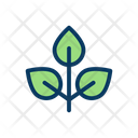 Leaf Natural Nature Icon