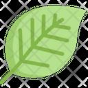 Leaf Plant Eco Icon