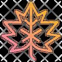 Leaf Autumn Season Icon