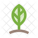 Leaf Sprout Plant Icon