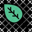 Leaf Leave Nature Icon