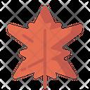 Leaf Nature Maple Icon
