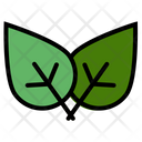Leaf Eco Green Icon