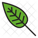Leaf Nature Green Icon