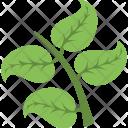 Twig Foliage Leafy Icon
