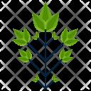 Bipinnately Greenery Leaf Icon