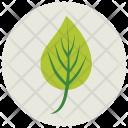 Leaf Plant Greenery Icon
