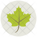 Leaf Maple Greenery Icon