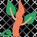 Leaf Tree Roots Icon