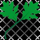 Oak Tree Grow Icon