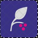 Leaf Plant Berry Icon