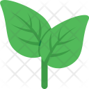 Leaf Nature Greenery Icon