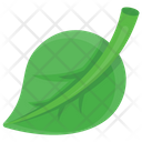 Leaf Structure Veins Icon