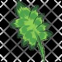 Leaf Spring Fall Planting Icon