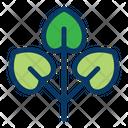 Plant Tree Jungle Icon