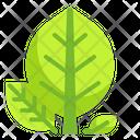 Leaf Leave Tree Plant Nature Spring Season Icon