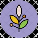 Leafs Leafy Plants Icon
