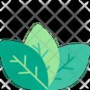 Leafs Healthy Organic Icon