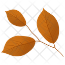 Leafy Twig Leaves Autumn Leaf Icon