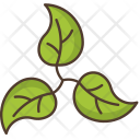 Leaves Branch Nature Icon