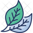 Leaves Plants Green Icon