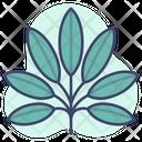Leaf Plants Herb Icon
