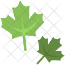 Leaves Fresh Green Icon
