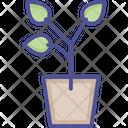 Leaves Plant Icon