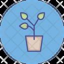 Leaves Plant Leaves Pot Garden Pot Icon